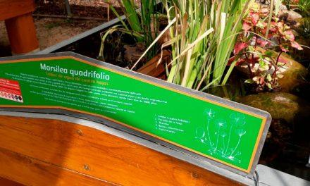Ingresa en el Hospital de Plantas de Pozuelo un helecho acuático en peligro de extinción