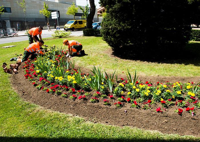 El Ayuntamiento anuncia una nueva plantación de flores y plantas de temporada en la ciudad