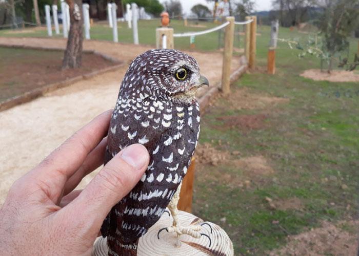 Una senda ornitológica adaptada permitirá a las personas con discapacidad sensorial y física conocer las aves más frecuentes