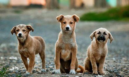 La Comunidad de Madrid invierte 1,8 millones en ayudas para la protección de los animales de compañía