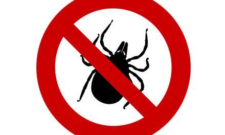 Consejos de Salud Pública de la Comunidad de Madrid para evitar picaduras de garrapatas
