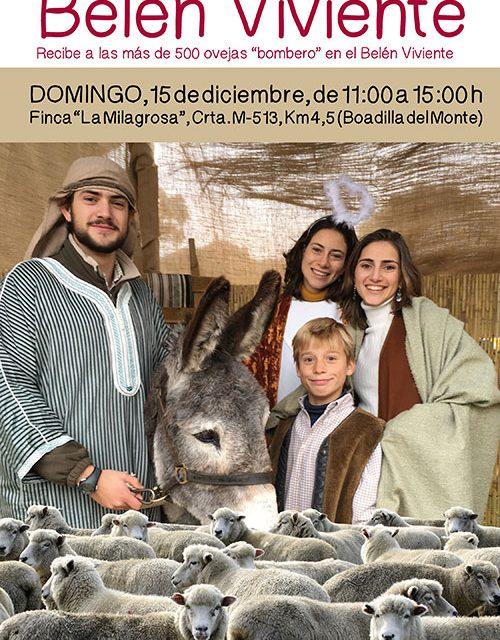 Las «ovejas-bombero» llegarán el domingo a La Milagrosa y participarán en el Belén viviente
