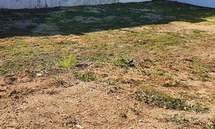 El Ayuntamiento de Pozuelo de Alarcón recuerda que el plazo para realizar el desbroce de parcelas finaliza el 15 de junio