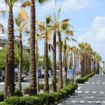 Finaliza la plantación de las primeras 130 palmeras en Infante D. Luis