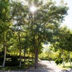 Pozuelo de Alarcón contará con un sistema de agua regenerada que servirá para la limpieza viaria y riego de zonas verdes